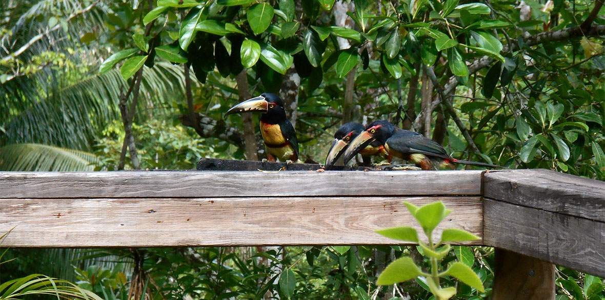 crystal paradise resort birds